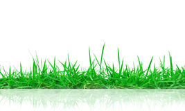 Green grass with reflection  Stock Image