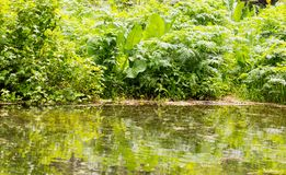 Green grass with reflection in the lake.  Royalty Free Stock Photo
