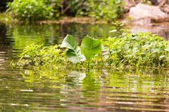 Green grass with reflection in the lake.  Stock Photography