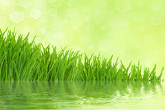 Green grass with reflection & light background. Abstract spring light green grass background with reflection Royalty Free Stock Photography