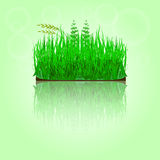 Green grass with reflection. Royalty Free Stock Photos