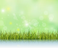 Green grass with reflection on water floor.Bokeh effect on light green and blue pastel color background Stock Image