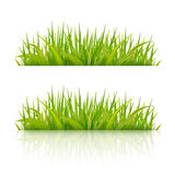 Green grass with reflection on white Royalty Free Stock Image