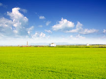 Green grass rice field in Valencia Spain Royalty Free Stock Photography