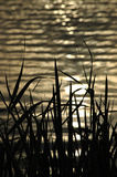 Green grass river bank. At nightfall, take a walk along the river bank stock image