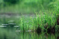 Green grass on the river bank Royalty Free Stock Image