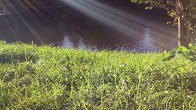 Green grass, river and sun. Lush green grass on the river bank and sun rays on a windy day stock footage