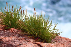 Green Grass Rock Granite Royalty Free Stock Photography