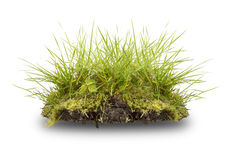 Green grass and root  isolated on white Stock Photo