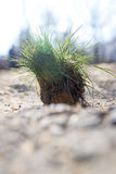 Green grass with roots on the ground Stock Photos
