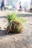 Green grass with roots on the ground Stock Images