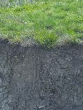 Green grass and roots in the ground Stock Image