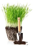 Green grass with roots in ground and shovel tool. Isolated on white background Royalty Free Stock Photos