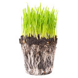 Green grass with roots Royalty Free Stock Photography