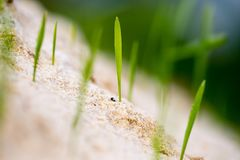 Green grass in the sand in the nature Royalty Free Stock Images