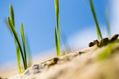 Green grass in the sand in the nature Stock Photo