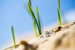 Green grass in the sand in the nature Royalty Free Stock Photos