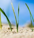 Green grass in the sand in the nature Stock Photos