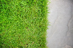 Green grass on sand stone background Stock Photography