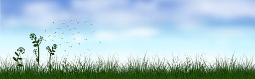 Green grass scenery under the blue sky Royalty Free Stock Photography