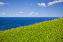 Green grass, the sea and blue sky Stock Photos