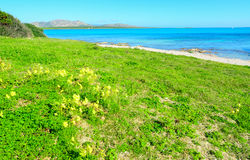 Green grass by the sea in Sardinia Stock Photo