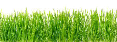 Green grass, seamless background Royalty Free Stock Image