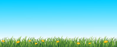Green grass seamless background royalty free illustration