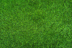 Green grass seamless background texture. Stock Photography