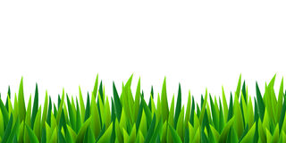 Green grass seamless border Royalty Free Stock Image