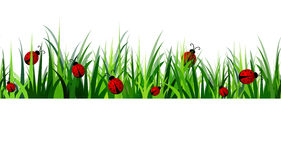 Green Grass seamless Stock Photography