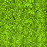 Green grass, seamless pattern Stock Photography