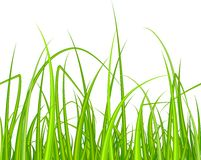 Green grass. Seamless pattern Stock Photos