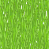 Green grass seamless pattern. Vector background natural greenery Royalty Free Stock Image