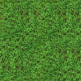 Green grass seamless texture Royalty Free Stock Image