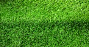 Green grass seamless texture Royalty Free Stock Photo