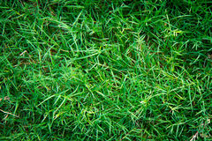 Green grass seamless texture Stock Photo