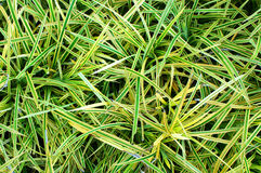 Green grass. Seamless texture. Close up Royalty Free Stock Images