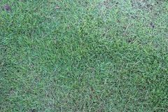 Green grass seamless texture natural background texture Stock Image