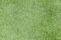 Green grass seamless texture. Seamless in only horizontal dimens. The green grass seamless texture Stock Images