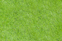 Green grass seamless texture. Seamless in only horizontal dimens Royalty Free Stock Photos