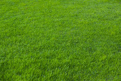 Green grass seamless texture. Seamless in only horizontal dimension. stock photography