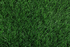 Green grass seamless texture. Seamless in only horizontal dimens Royalty Free Stock Photography