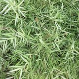 Green grass seamless texture. Seamless in only horizontal dimension Stock Photography