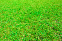 Green grass seamless texture in soccer field Stock Image