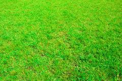 Green grass seamless texture in soccer field Royalty Free Stock Photography