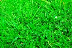 Green grass seamless texture in soccer field Stock Photos