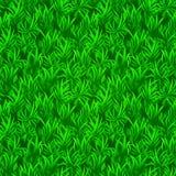 Green grass seamless texture. Vector realistic illustration. Stock Photos