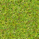 Green Grass. Seamless Texture. Royalty Free Stock Photo