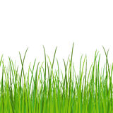 Green grass - seamless vector Stock Image